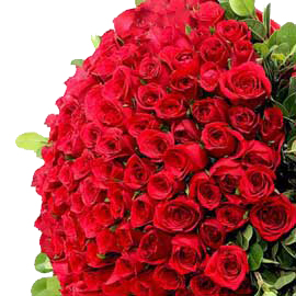 buy 250 red roses bunch same day delivery in kanpur