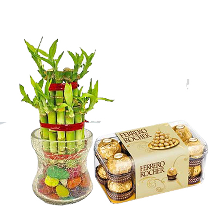 Same day online lucky bamboo with 16 pcs rocher chocolate box in kanpur