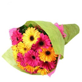 buy 15 pink n yellow gerberas bunch fast delivery in Kanpur
