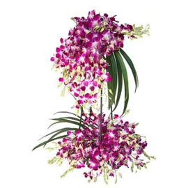 send 70 purple orchids designer one sided basket 24 hrs delivery in kanpur