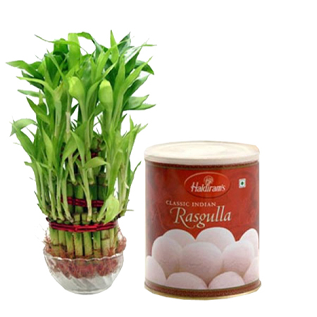 Midnight online 3 layer lucky bamboo n 1 kg haldiram rasgulla in kanpur