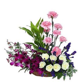 send carnations roses n orchids basket same day delivery in kanpur