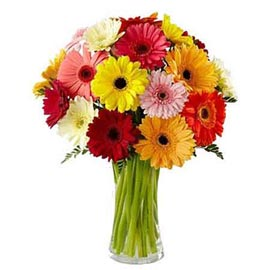 send 15 mix gerberas bunch same day delivery in Kanpur