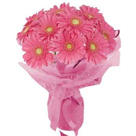 buy 15 pink gerberas bunch midnight delivery in Kanpur