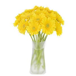 buy 12 yellow gerberas glass vase midnight delivery in kanpur